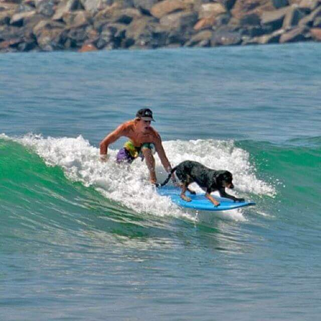 Man And Dog Surfing